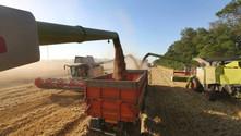 Rus buğdayının fiyatı yükseldi