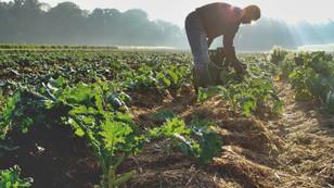 'Marketlerde iyi tarım belgeli ürünler satılmalı'