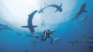 Kaptan Cousteau ile Derinliklere Yolculuk