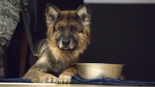 İncirlik Üssü'nün K-9 köpeği emekli oldu