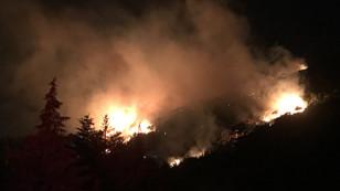 Karşıyaka'da orman yangını çıktı