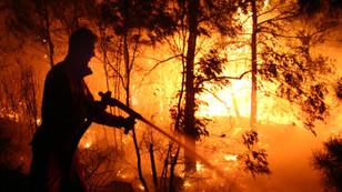 Türkiye'de son 10 yılda 24 bin 264 orman yangını çıktı