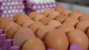 Kaytaş, yeni yatırımla tavuk üretimini 2 milyona çıkaracak