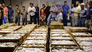 Bir kilo tavuk fiyatına bir kasa balık