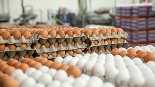 AB bakanları yumurta krizini görüşecek