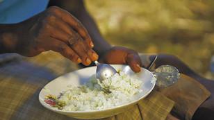 Bu pirinç yetersiz beslenmeye çözüm olacak