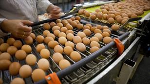 Türkiye'den 19 ülkeye,180 milyon dolarlık yumurta ihracatı
