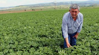 Çiftçiler patatesten umutlu
