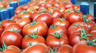 Rusya kapısı açılmazsa domatesler salça olacak