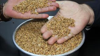 Yılın ilk buğdayı tescil edildi