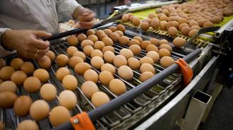 Türkiye'de fipronilli yumurta tespit edilmedi