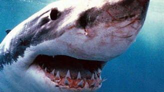 Mısır'da köpek balığı paniği