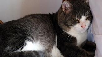 'Obez kedi' diyetle 4 ayda 5,5 kilo verdi