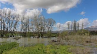 Büyük Menderes taştı, tarlaları su bastı