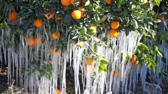 Kar yağışı ve don meyve ağaçlarına zarar verdi