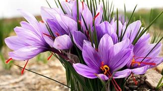 Tıbbi ve  aromatik bitkilere destek