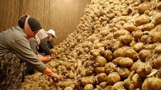 20 bin ton patates depolarda bekliyor