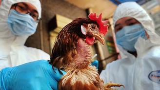 Kuş gribi ABD'nin tavuk ihracatını tehdit ediyor