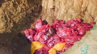 Gebze'de kuş gribi alarmı: 10 bin tavuk itlaf edildi!