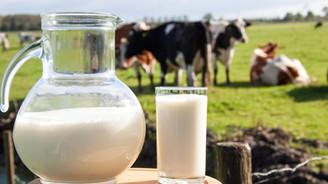 Nisanda 817 bin ton inek sütü toplandı