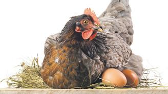 Yumurta ve beyaz et yasağına karşı Irak'a heyet göndereceğiz