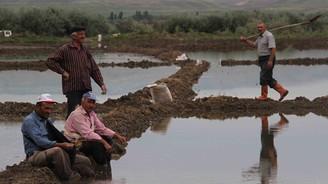 Çankırı'da çeltik ekimi başladı