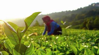 Organik tarımda üretim 1 milyon tonu aştı
