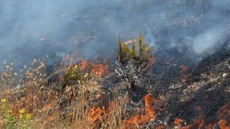 Bitlis'te orman yangını