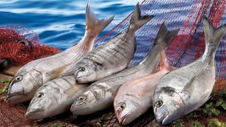 Yetiştiricilik artıyor avcılık azalıyor