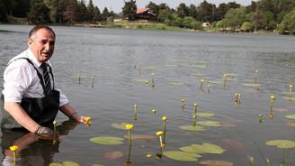 Bolu'da endemik bitkiler koruma altına alınıyor