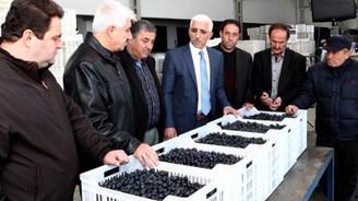 Üreticilere 48 milyon lira ödeyecek