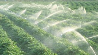 Tahıl ve sebzede üretim arttı
