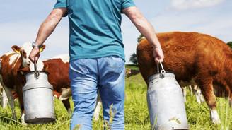 Reçetesiz satılan antibiyotik süt sektörüne zarar veriyor
