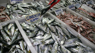 Marmaralı balıkçıların yüzünü çinekop güldürdü