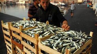 Balıkçılık av sezonu kapanıyor