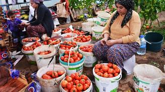 Simav'da jeotermal enerjiyle domates üretimine ilgi