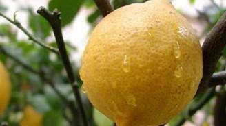 Mayıs ayının zam şampiyonu limon