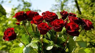 Karanfil ve güller anneler için hazırlanıyor