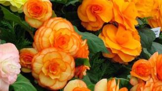 İhracatla % 40 büyüyen çiçekte girişimcilere 'yeni pazar' fırsatı