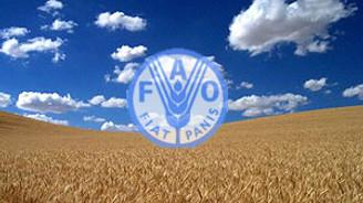 FAO gıda fiyat endeksi yüzde 36 arttı