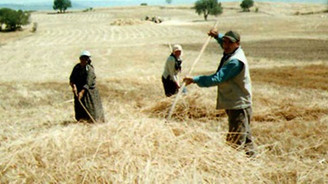 Çiftçiye yarın 735 milyon TL ödenecek