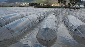 Aşırı yağışlar sera ürünlerini vurdu