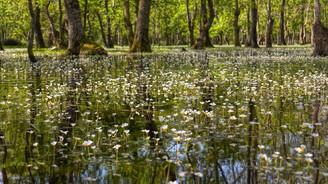 Kızılırmak Deltası, Samsun'un turizm cennetine dönüşecek