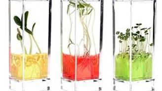 Canlı bitki laboratuvarı kuruluyor