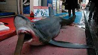 3 metrelik köpek balığı ilgi odağı oldu