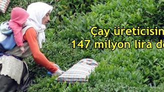 Çay üreticisine 147 milyon lira destek