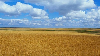 2.5 milyon ton tahıl kayboldu