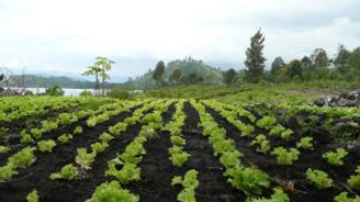 TZOB: Çiftçiler sele karşı henüz sigorta yaptıramadı