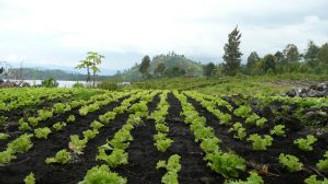 Bitkisel üretim geçen yıl yüzde 3,5 arttı