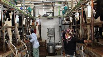 Süt üreticileri istikrarsızlıktan rahatsız